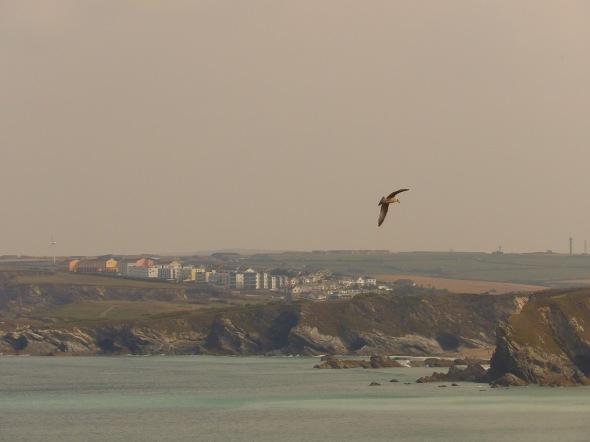The Gull, Newquay, Cornwall